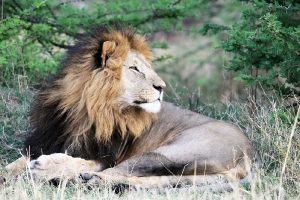Masai Mara_13