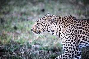 Masai Mara_15