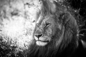 Masai Mara_1