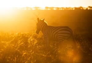 Masai Mara_2