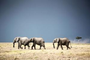 Masai Mara_6