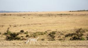 Masai Mara_7